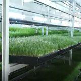 Hydroponic Sprout Barley Wheatgrass Corn alfalfa germination chamber